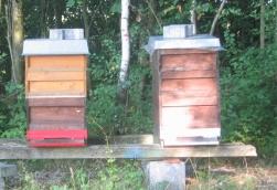 Bienenvölker023