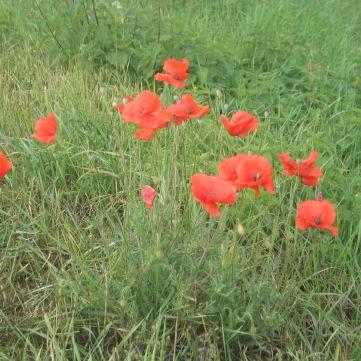 BlumenamFeldrand