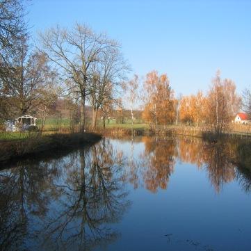 Herbstbäume1
