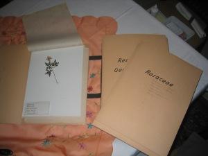 Herbarium04