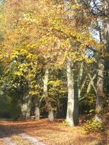 Herbstlich03
