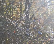 Herbstlich07