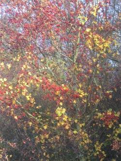 Herbstlich09