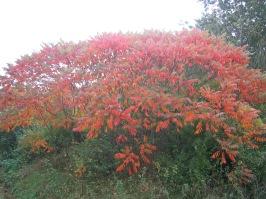Herbstlich20