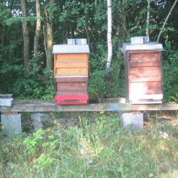 Bienenvölker02