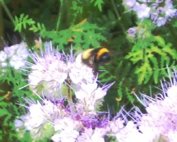 Bienin Aktion3